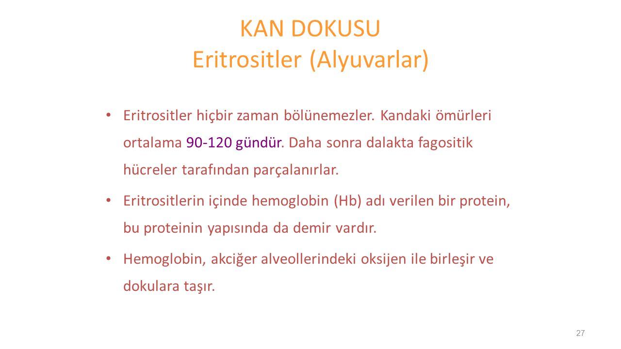KAN DOKUSU Eritrositler (Alyuvarlar)