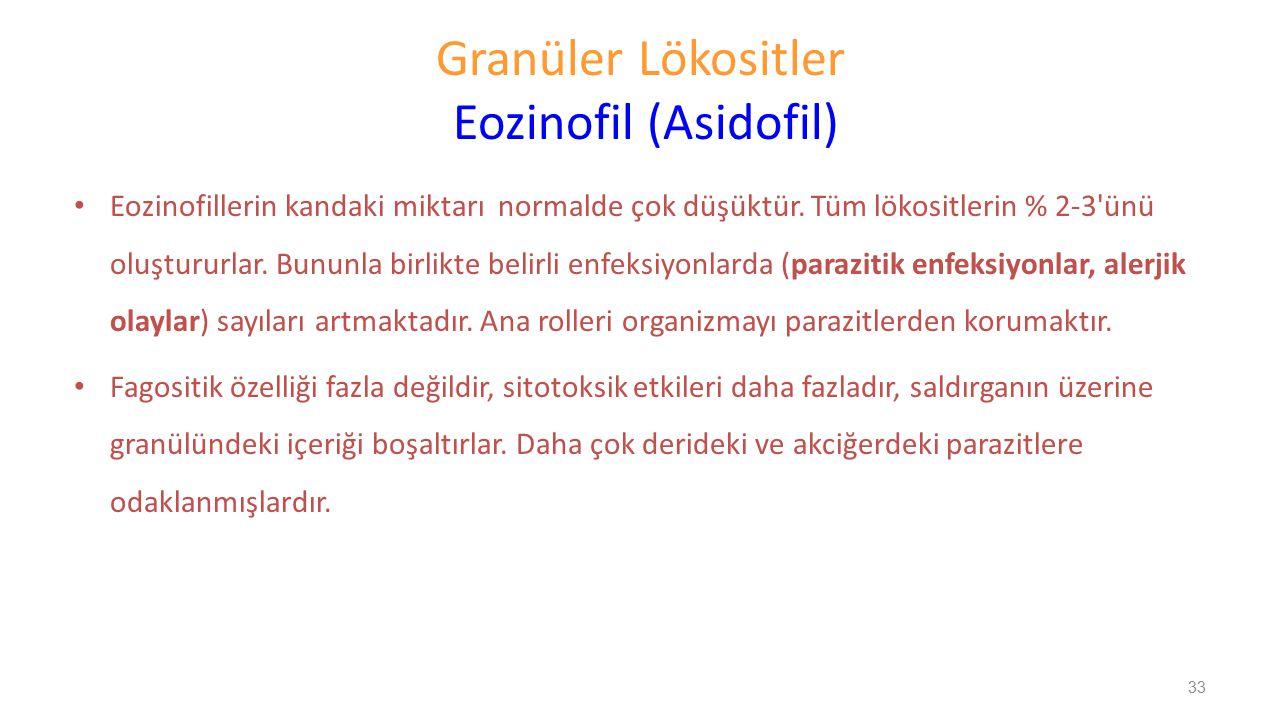 Granüler Lökositler Eozinofil (Asidofil)