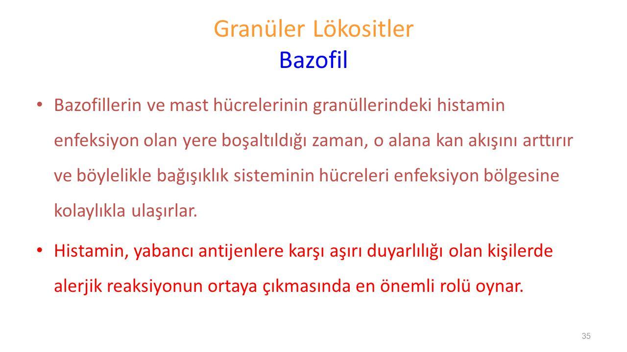 Granüler Lökositler Bazofil