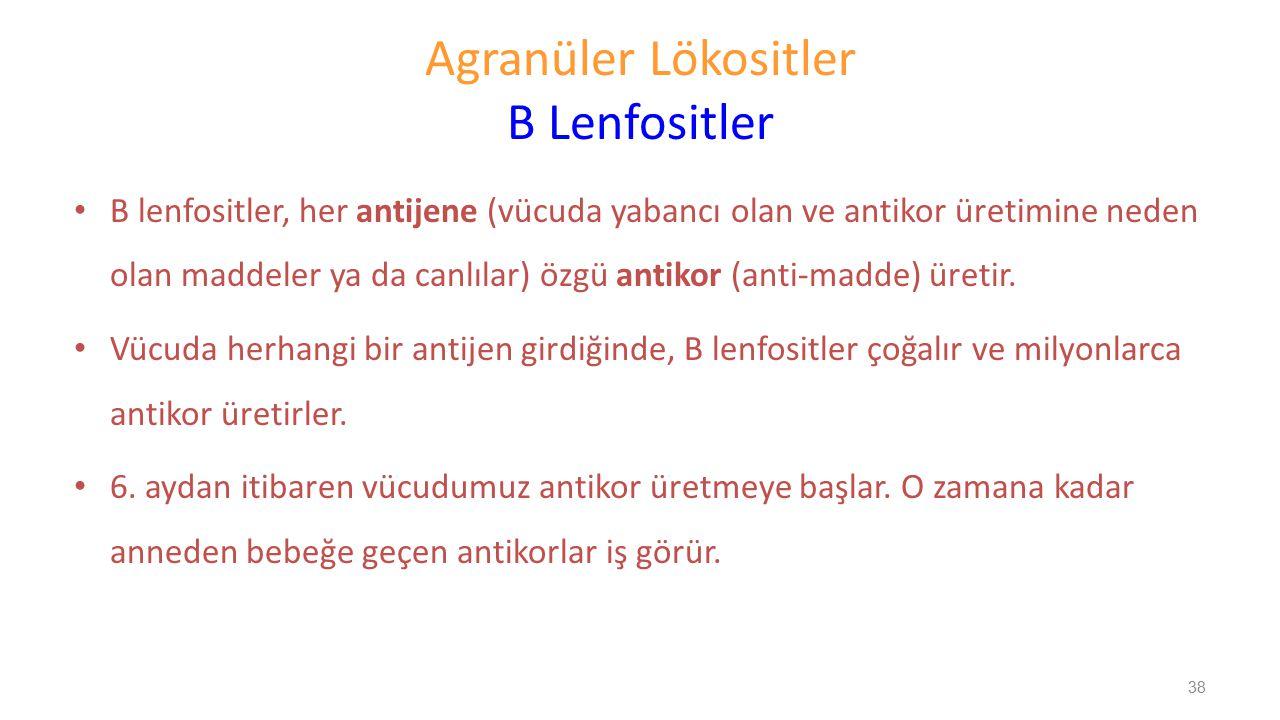 Agranüler Lökositler B Lenfositler