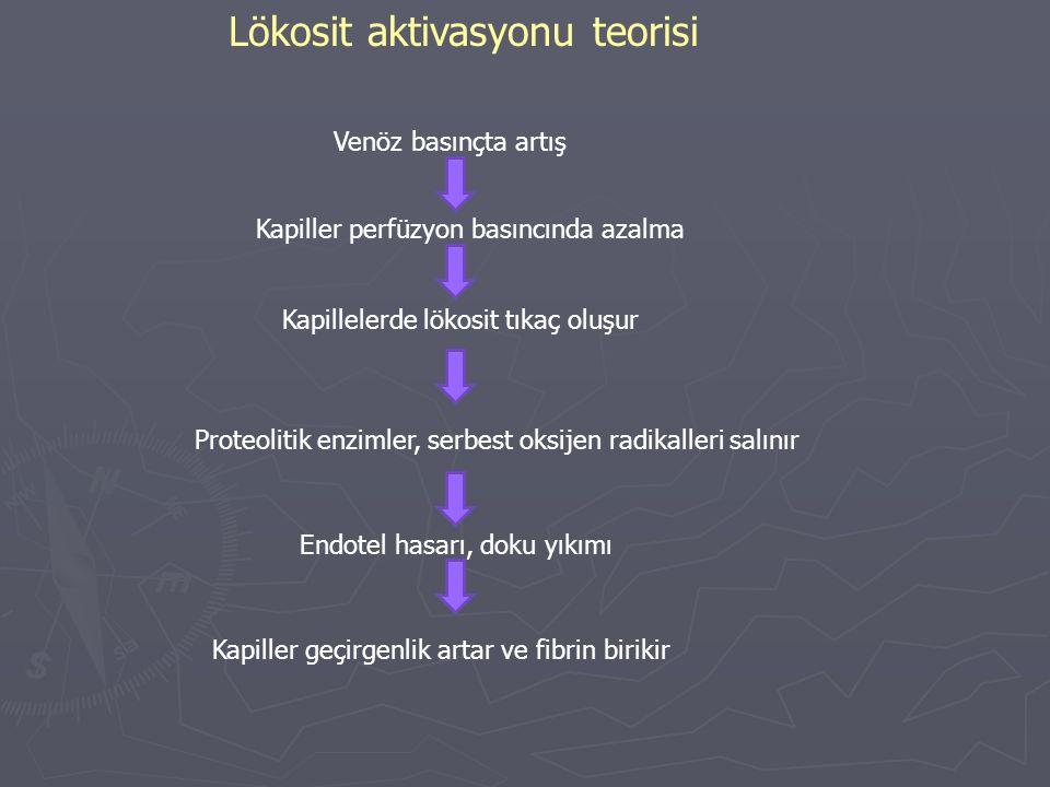 Lökosit aktivasyonu teorisi