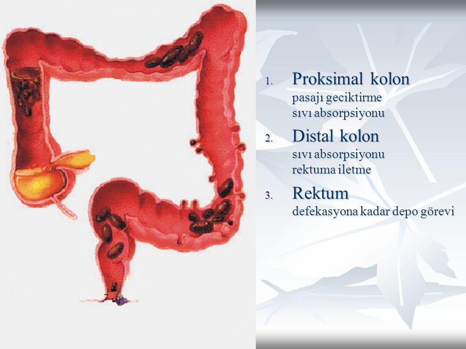 Proksimal kolon pasajı geciktirme sıvı absorpsiyonu