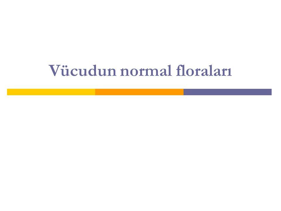 Vücudun normal floraları
