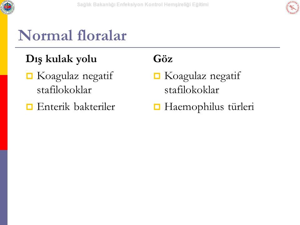 Normal floralar Dış kulak yolu Koagulaz negatif stafilokoklar