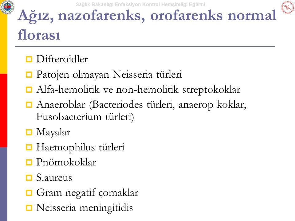 Ağız, nazofarenks, orofarenks normal florası