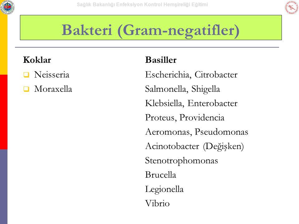 Bakteri (Gram-negatifler)
