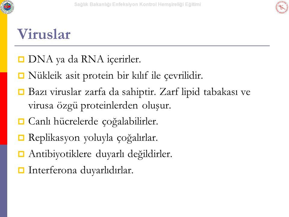 Viruslar DNA ya da RNA içerirler.