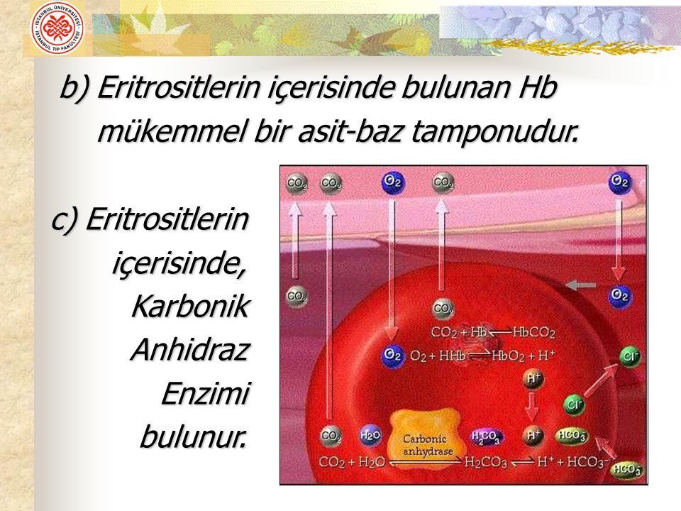 Eritrositlerin içerisinde bulunan Hb