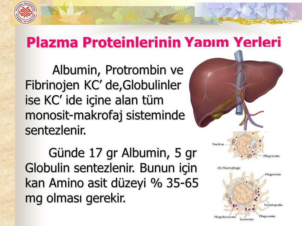 Plazma Proteinlerinin Yapım Yerleri