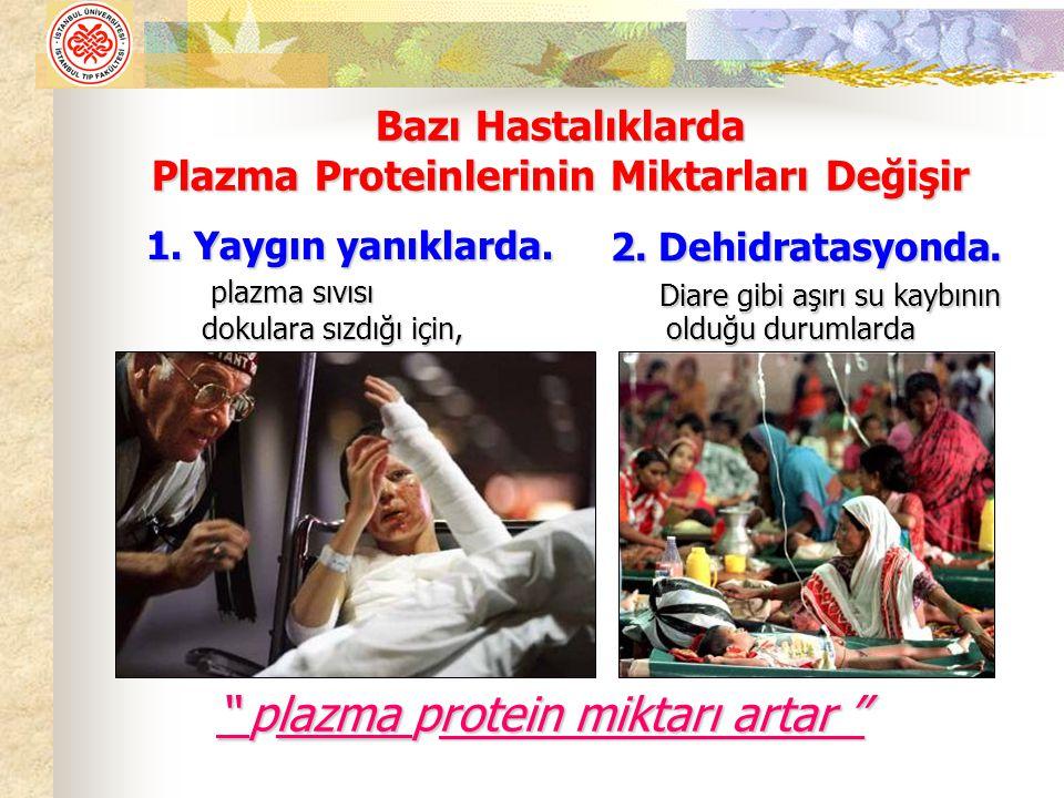 Plazma Proteinlerinin Miktarları Değişir