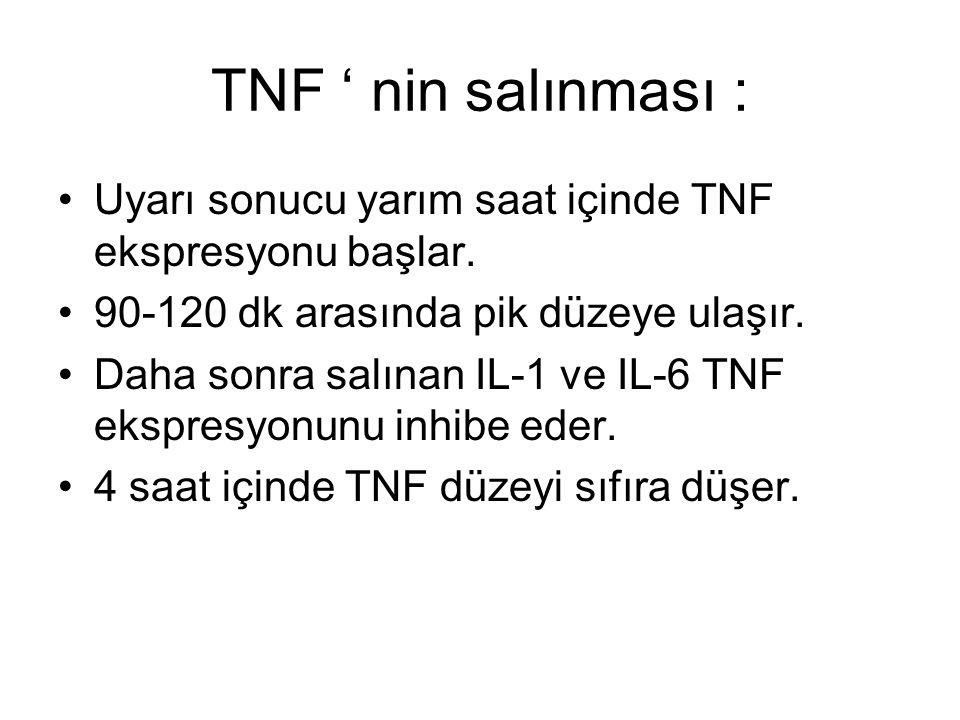TNF ' nin salınması : Uyarı sonucu yarım saat içinde TNF ekspresyonu başlar. 90-120 dk arasında pik düzeye ulaşır.