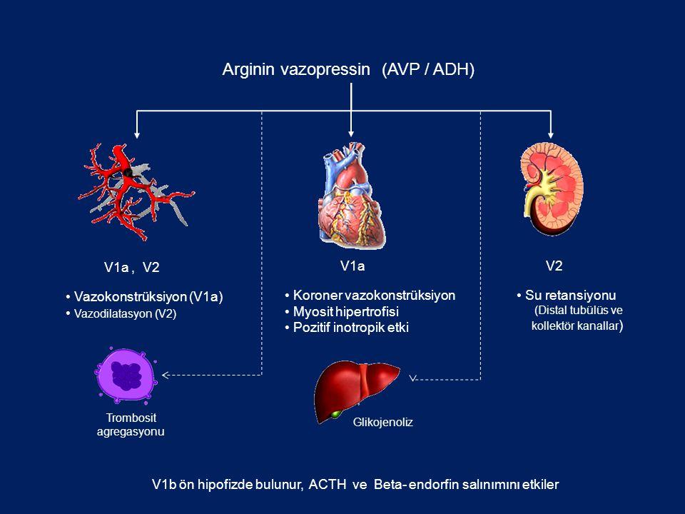 Arginin vazopressin (AVP / ADH)