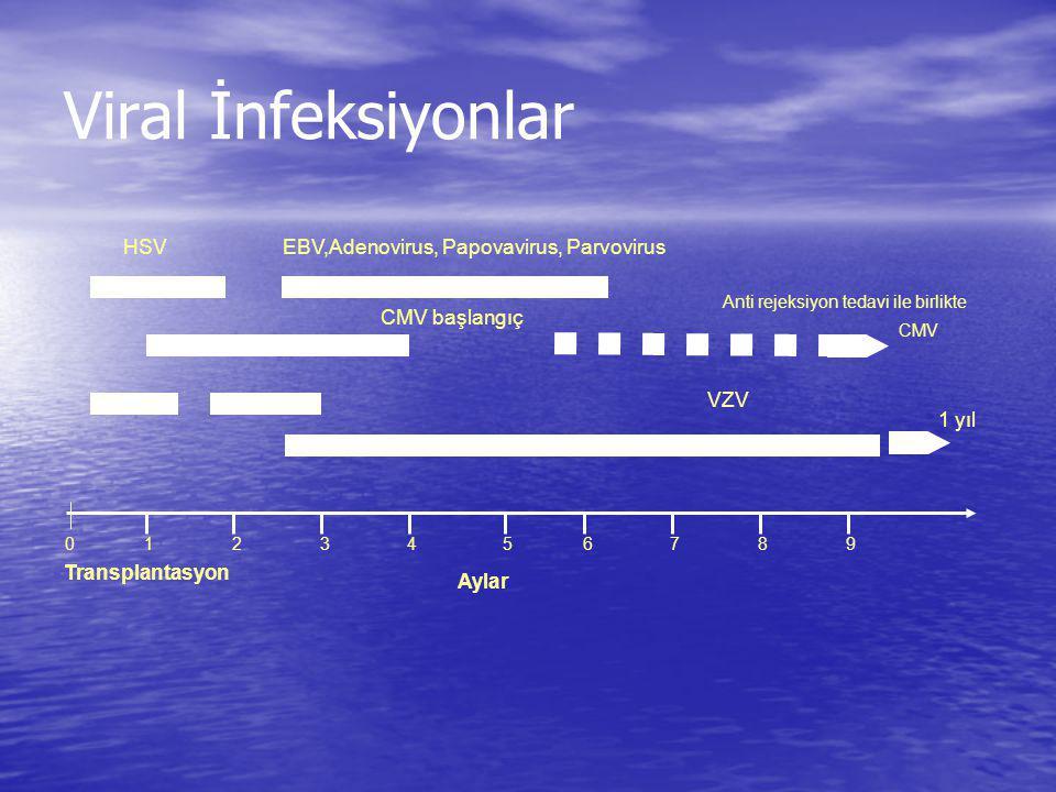 Viral İnfeksiyonlar HSV EBV,Adenovirus, Papovavirus, Parvovirus