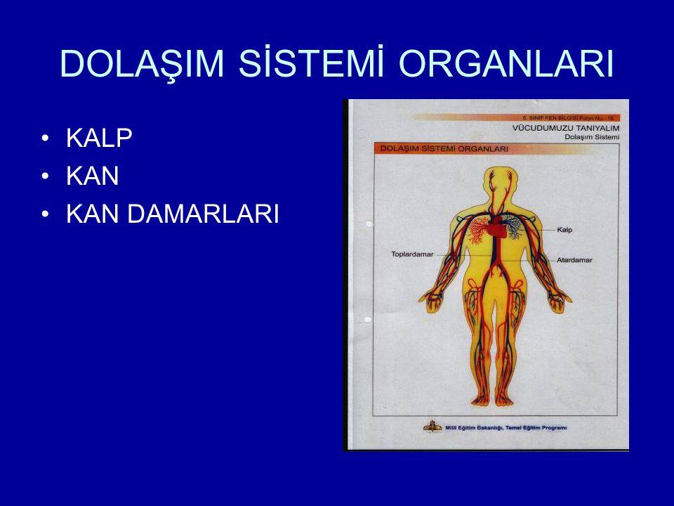 DOLAŞIM SİSTEMİ ORGANLARI