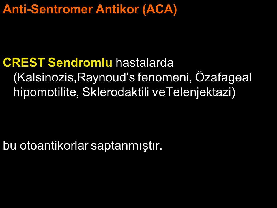 Anti-Sentromer Antikor (ACA)