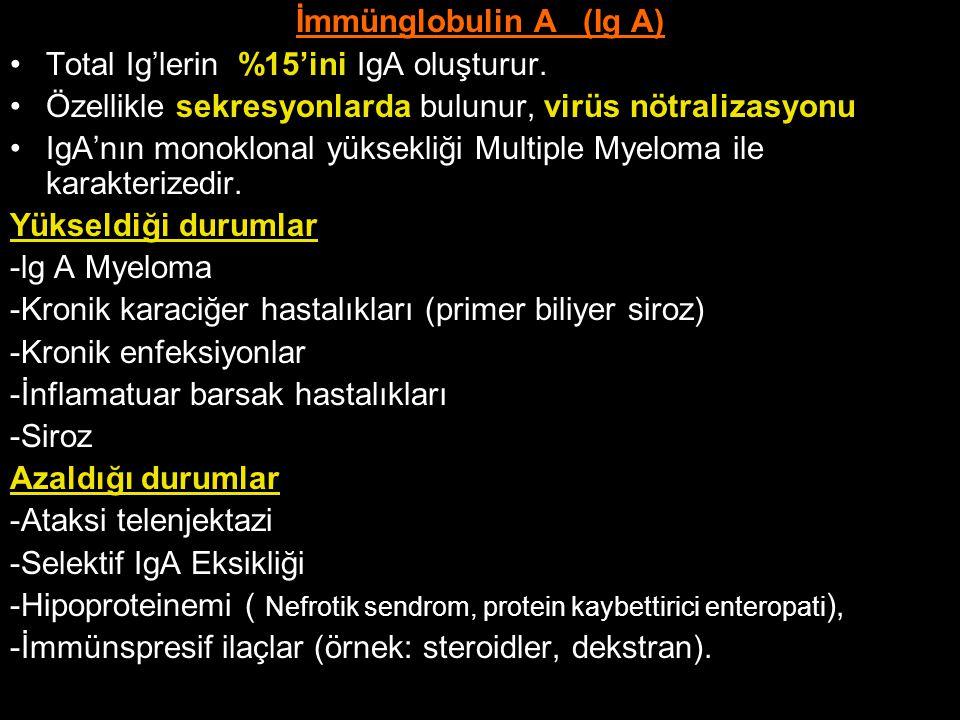 İmmünglobulin A (Ig A) Total Ig'lerin %15'ini IgA oluşturur. Özellikle sekresyonlarda bulunur, virüs nötralizasyonu.