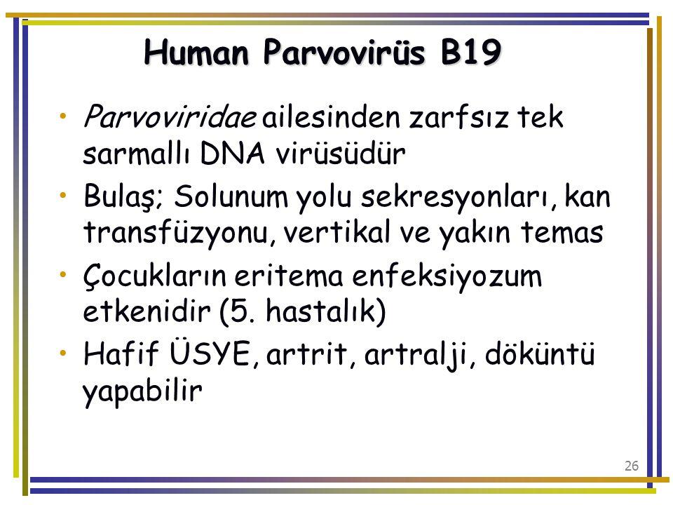 Human Parvovirüs B19 Parvoviridae ailesinden zarfsız tek sarmallı DNA virüsüdür.
