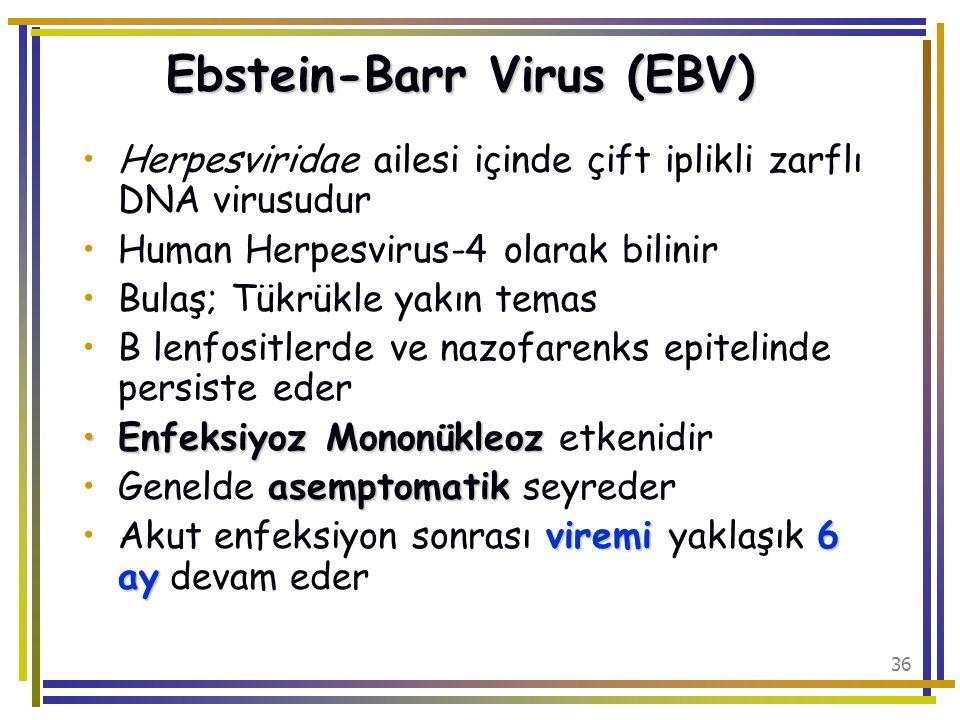 Ebstein-Barr Virus (EBV)