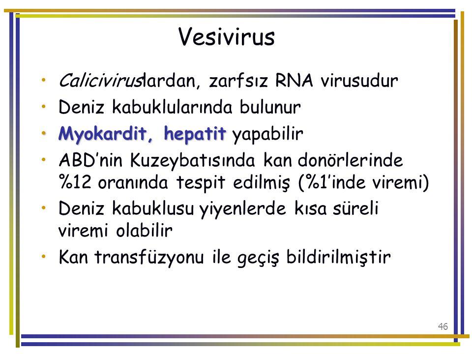 Vesivirus Caliciviruslardan, zarfsız RNA virusudur