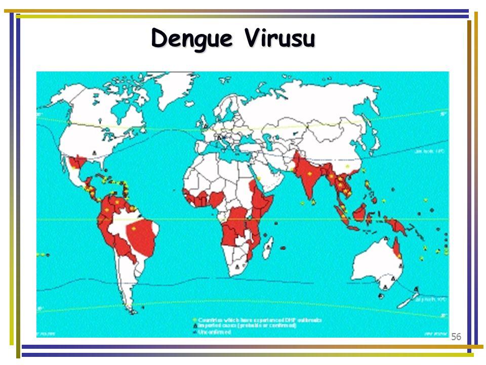 Dengue Virusu
