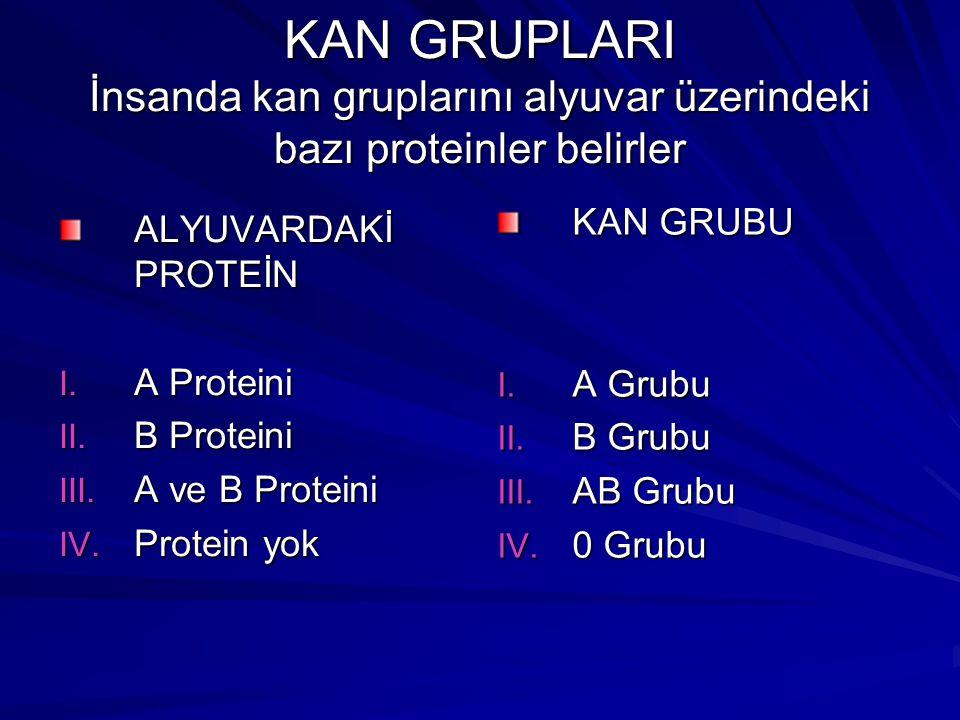 KAN GRUPLARI İnsanda kan gruplarını alyuvar üzerindeki bazı proteinler belirler