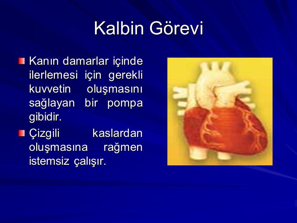 Kalbin Görevi Kanın damarlar içinde ilerlemesi için gerekli kuvvetin oluşmasını sağlayan bir pompa gibidir.