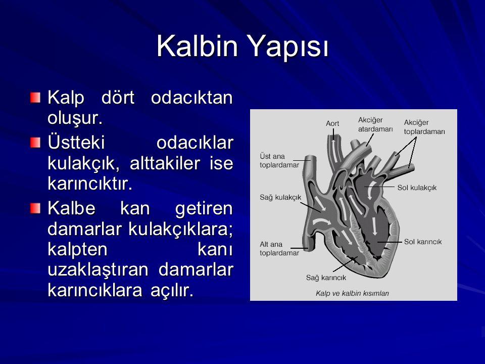 Kalbin Yapısı Kalp dört odacıktan oluşur.
