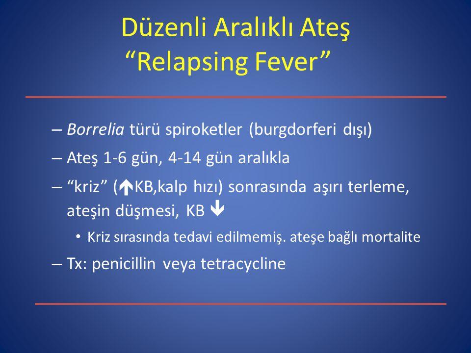 Düzenli Aralıklı Ateş Relapsing Fever