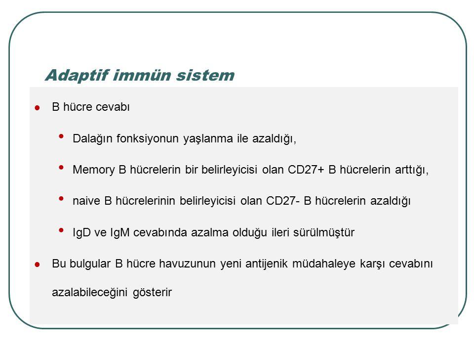 Adaptif immün sistem B hücre cevabı