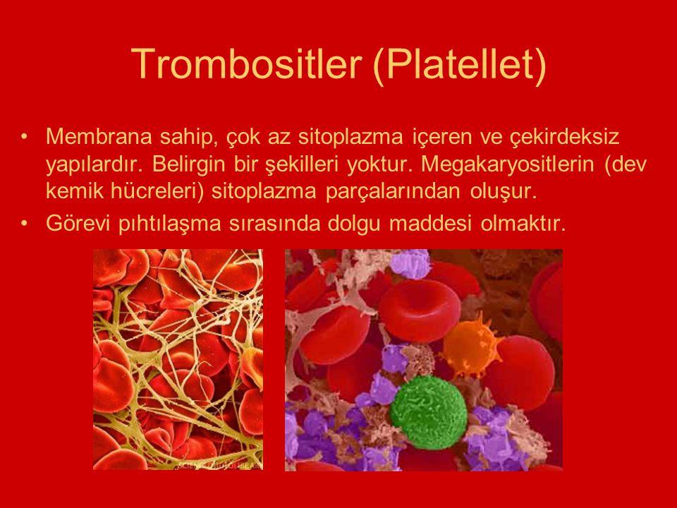 Trombositler (Platellet)