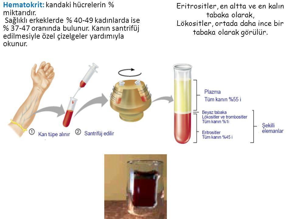 Hematokrit: kandaki hücrelerin % miktarıdır.