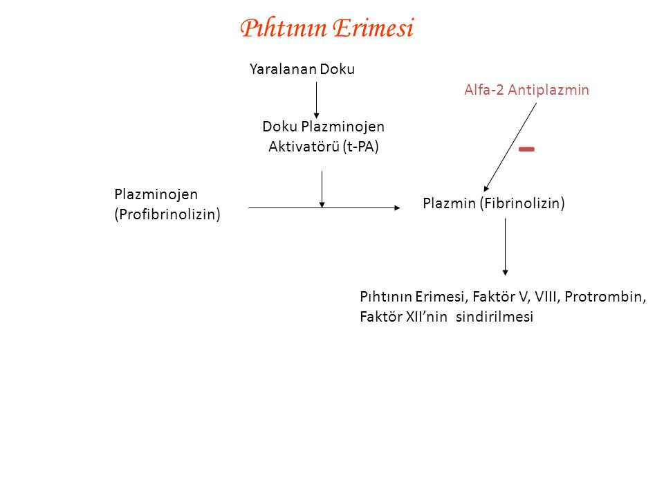 Doku Plazminojen Aktivatörü (t-PA)