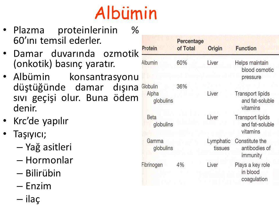 Albümin Plazma proteinlerinin % 60'ını temsil ederler.