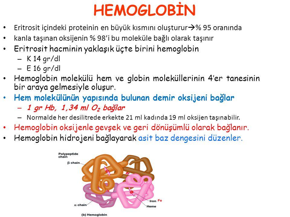 HEMOGLOBİN Eritrosit içindeki proteinin en büyük kısmını oluşturur% 95 oranında. kanla taşınan oksijenin % 98'i bu moleküle bağlı olarak taşınır.