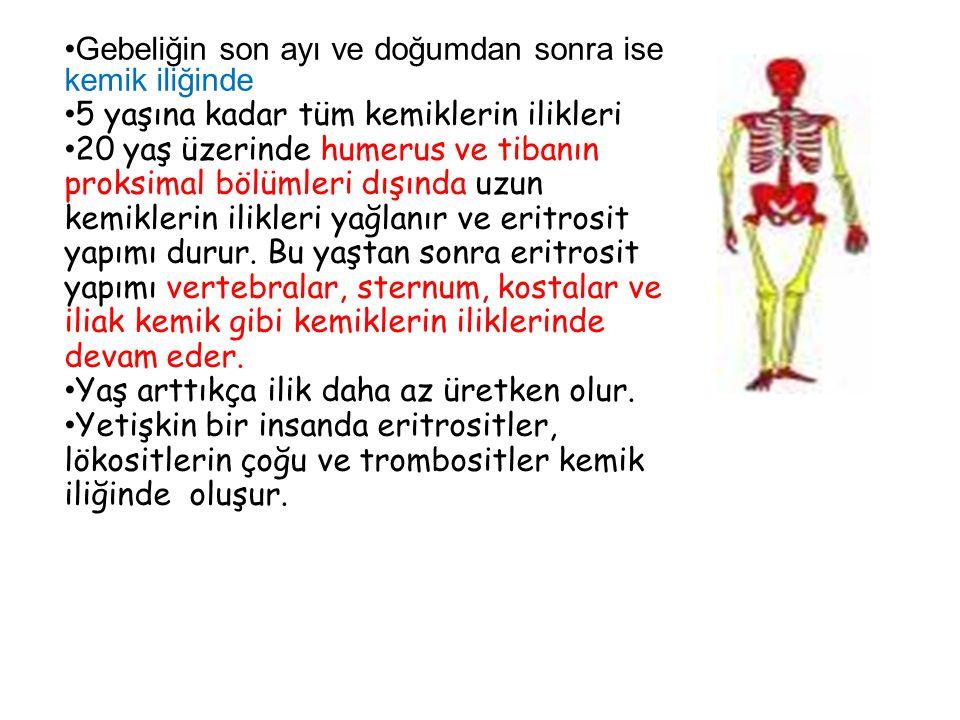 Gebeliğin son ayı ve doğumdan sonra ise kemik iliğinde