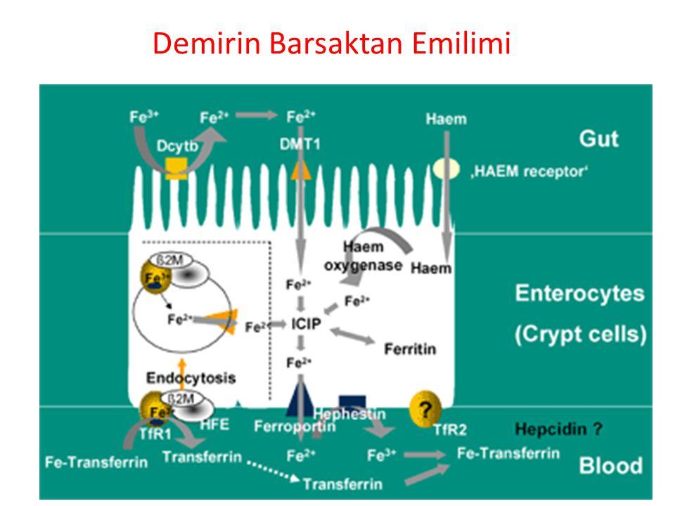Demirin Barsaktan Emilimi