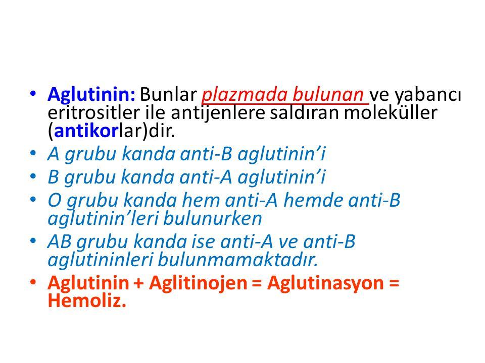 Aglutinin: Bunlar plazmada bulunan ve yabancı eritrositler ile antijenlere saldıran moleküller (antikorlar)dir.
