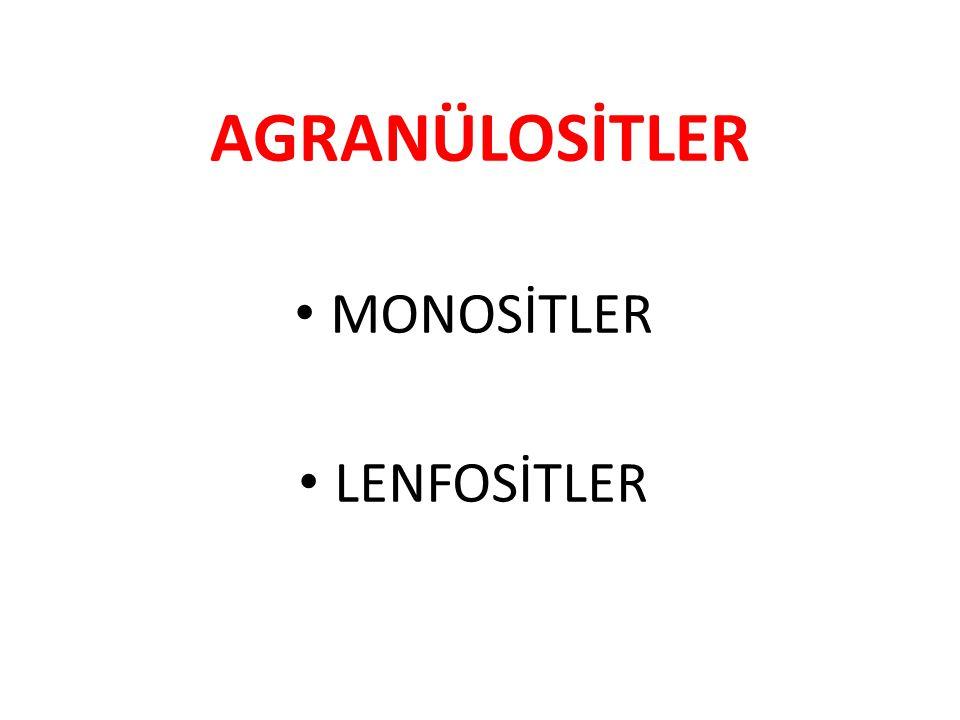AGRANÜLOSİTLER MONOSİTLER LENFOSİTLER