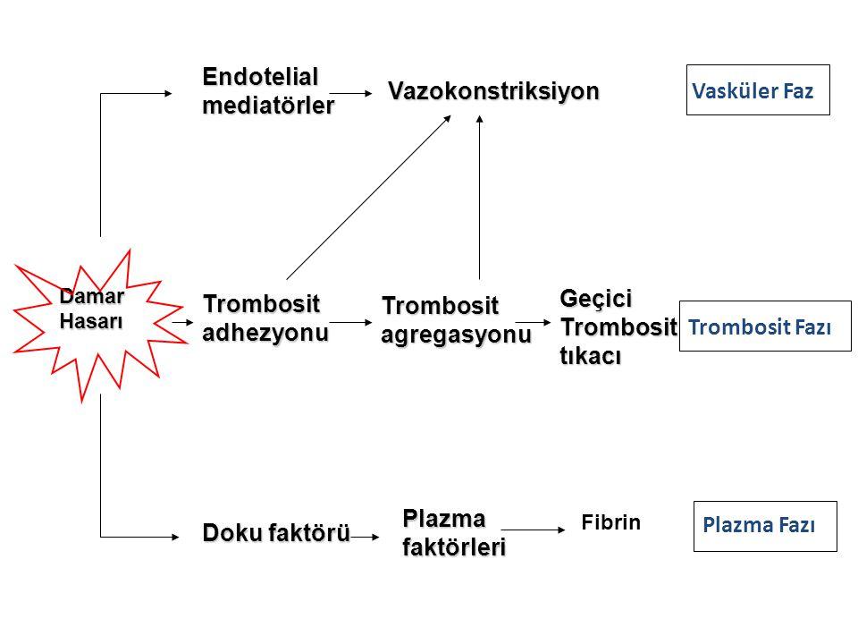 Endotelial mediatörler