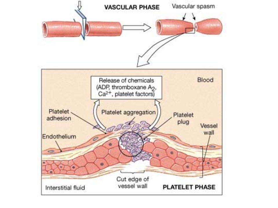 Trombosit agregasyonu