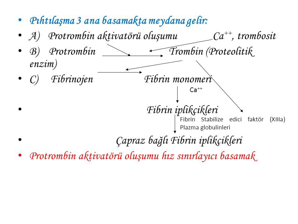 Pıhtılaşma 3 ana basamakta meydana gelir: