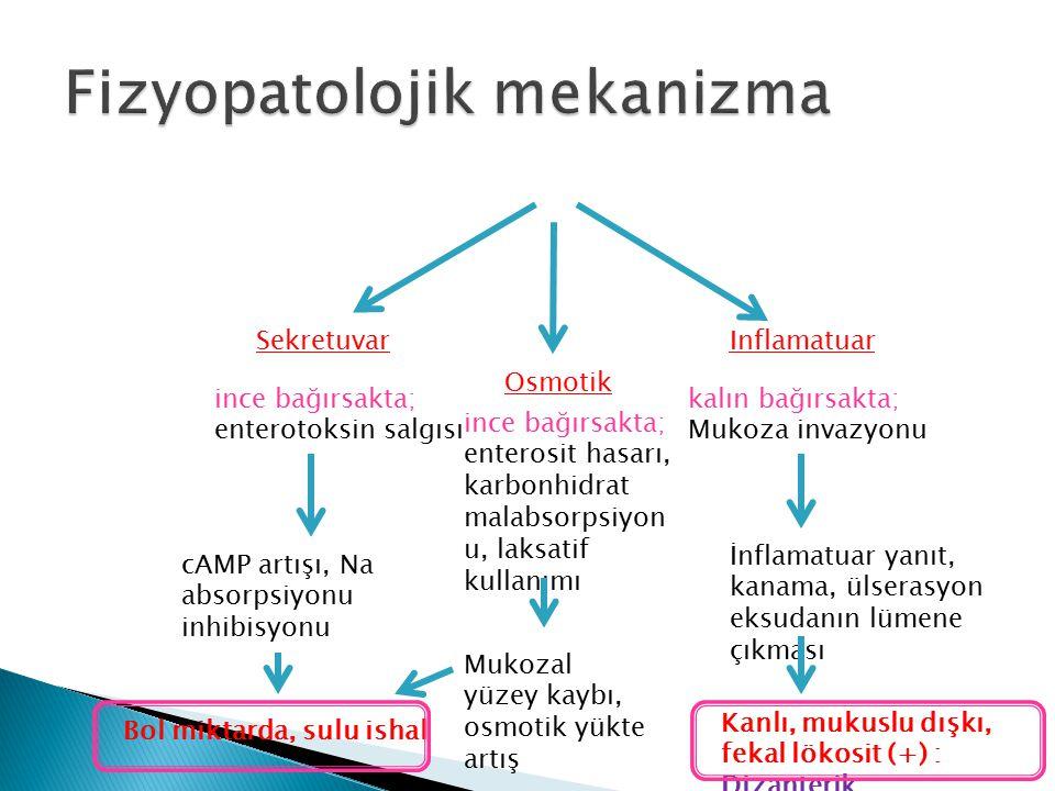 Fizyopatolojik mekanizma