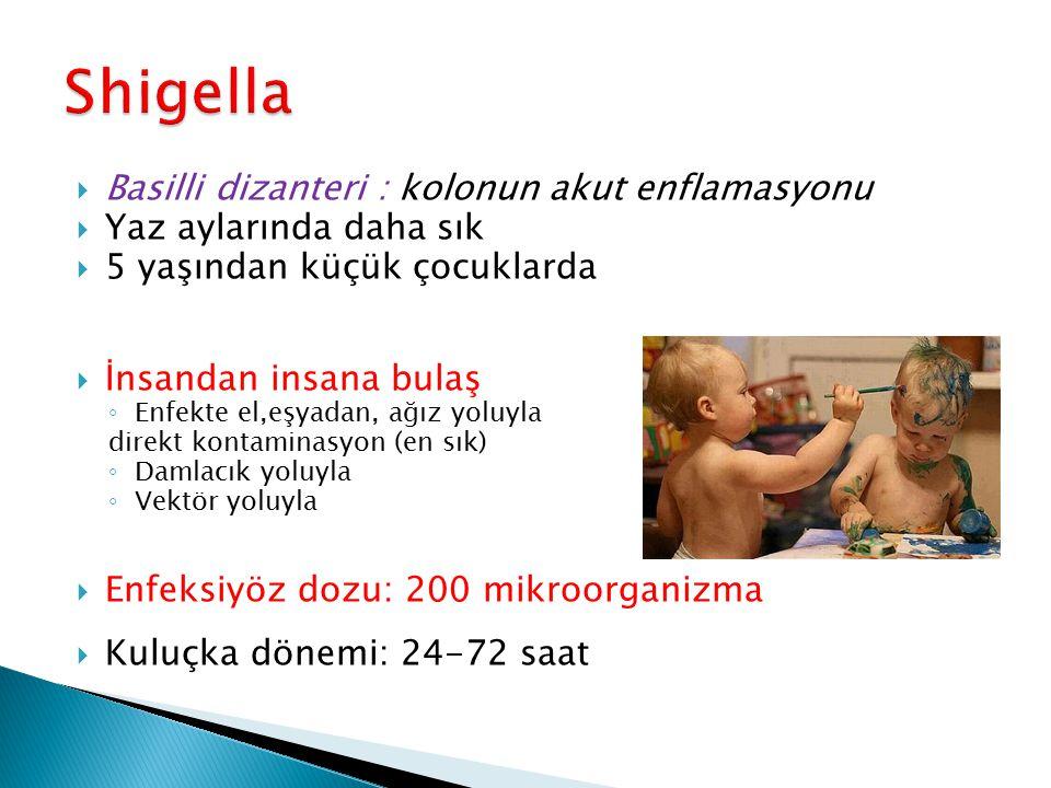 Shigella Basilli dizanteri : kolonun akut enflamasyonu