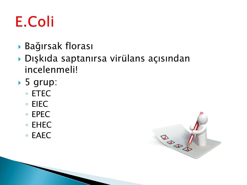 E.Coli Bağırsak florası