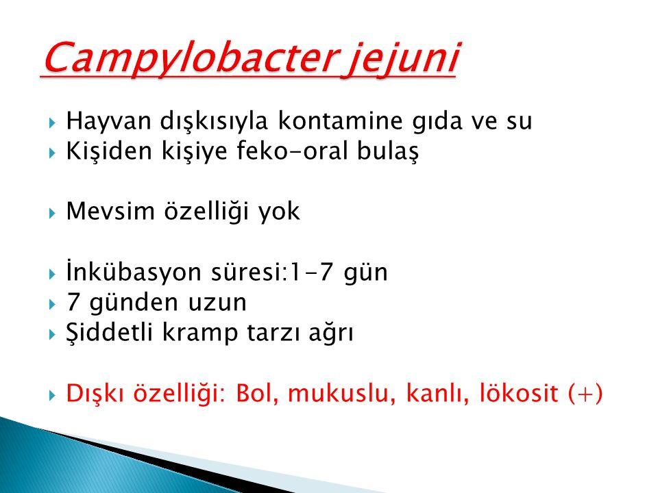 Campylobacter jejuni Hayvan dışkısıyla kontamine gıda ve su