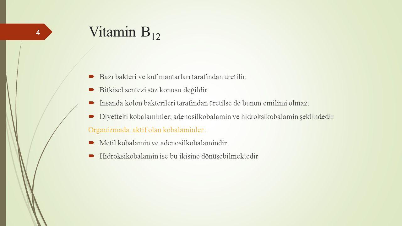 Vitamin B12 Bazı bakteri ve küf mantarları tarafından üretilir.