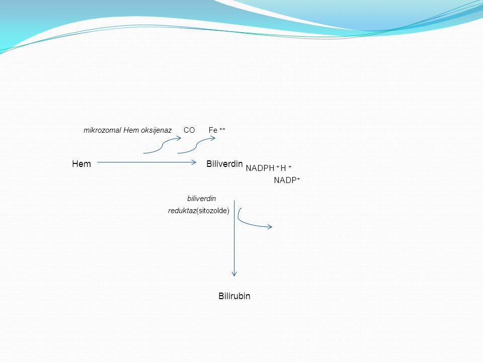 Hem Biliverdin NADPH + H + biliverdin