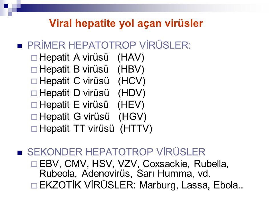 Viral hepatite yol açan virüsler
