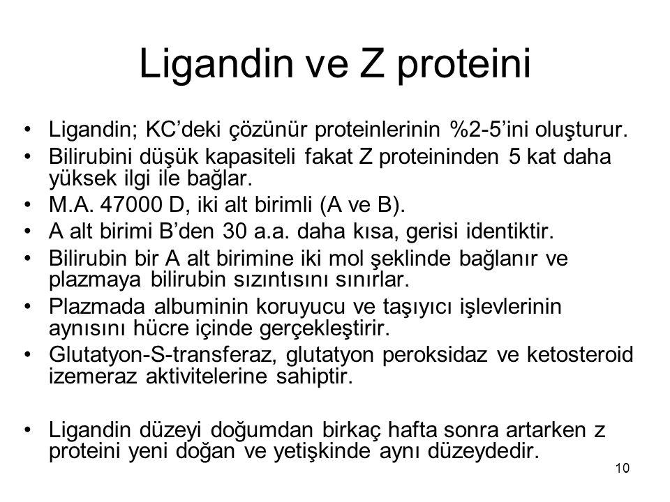 Ligandin ve Z proteini Ligandin; KC'deki çözünür proteinlerinin %2-5'ini oluşturur.