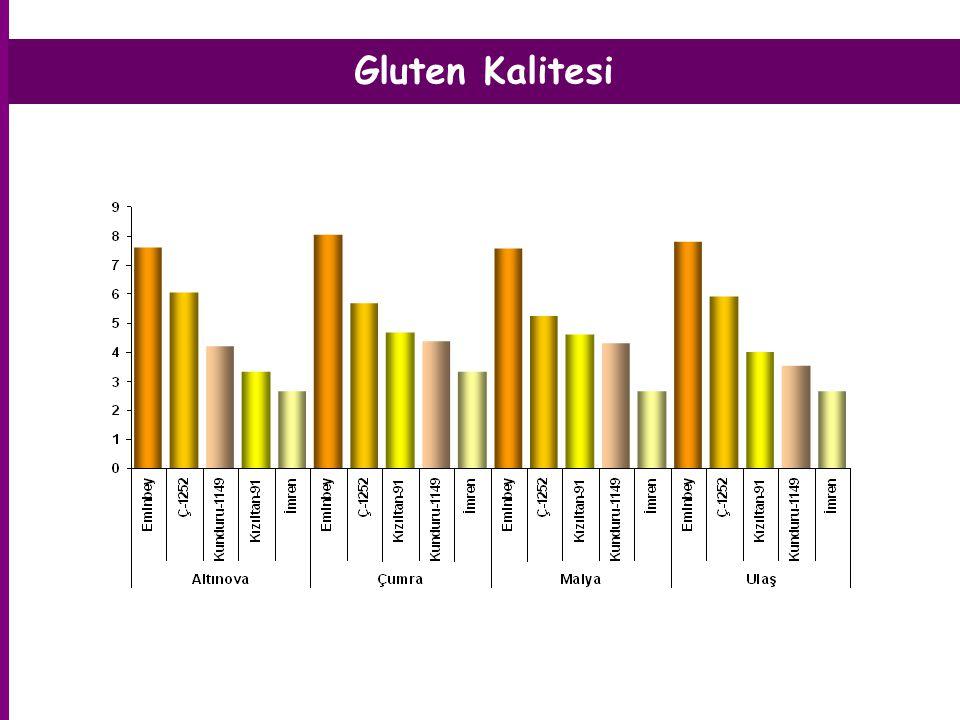 Gluten Kalitesi